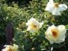 Bild från Nancy och Rolands Trädgård